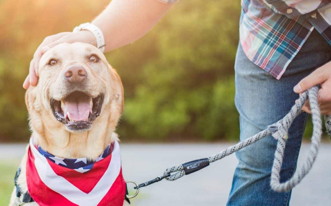 Best Dog Safety Tips on the Fourth of July